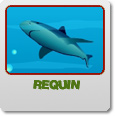 logo Requin